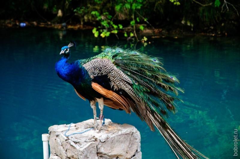 Сфотографировать птицу на фоне себя стоит денег. Сфотографировать птицу на фоне озера - бесплатно.