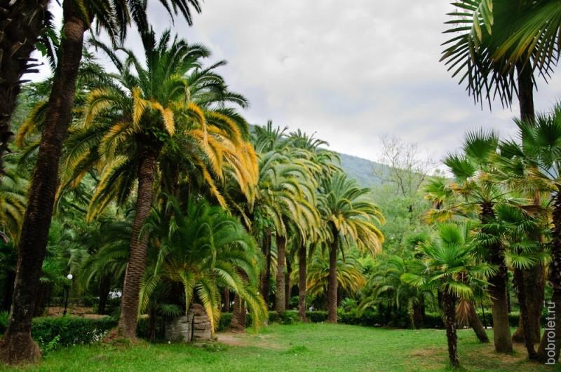 Просто пальмовая столица какая-то.