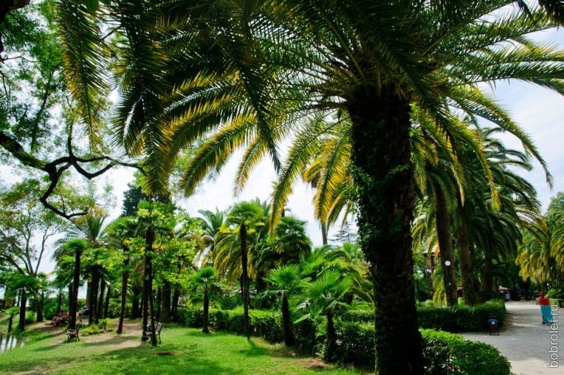 И еще немного пальм. Очень уж они красивые.