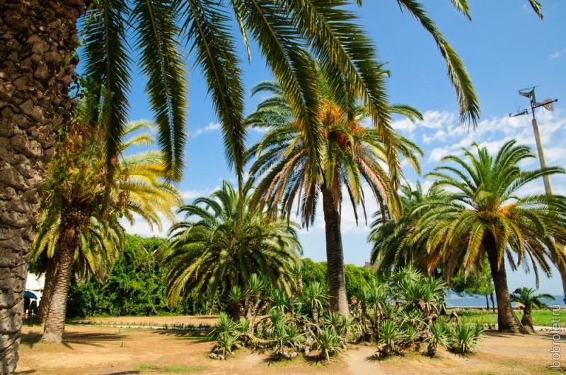 Пальмы, рядом с которыми все фотографируются.