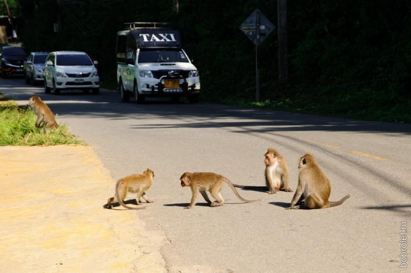 По дороге беззастенчиво скачут объзьяны