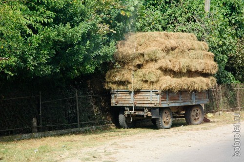 Как же в коровьем царстве без сена?