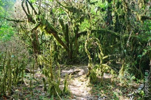 Великолепно-монструозные деревья окружают нас, как в сказочном лесу.