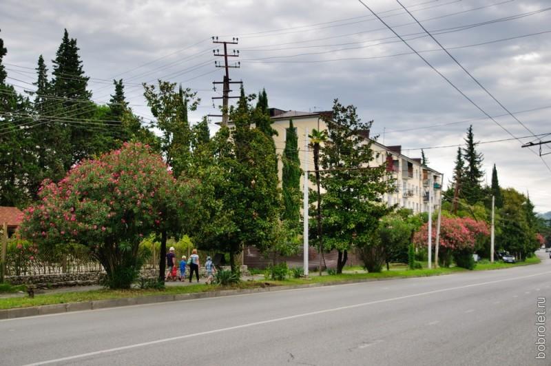 Абхазия - страна цветов. Даже вдоль междугородних трасс здесь растут цветущие кусты.